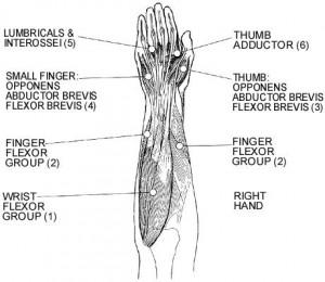 Muschii mainii